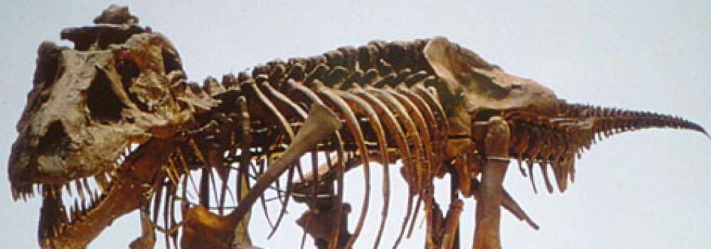 Foster Raymond: Fossil Hunter