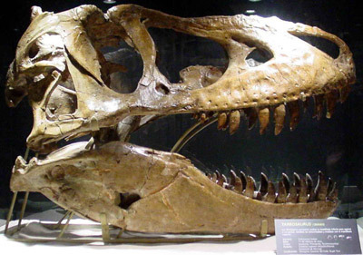 Nicholas Cage's Tarbosaurus Skull Came from Convicted Fossil Thief