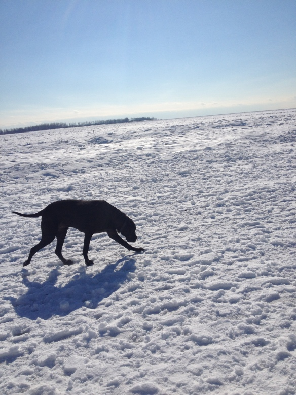 Digby stalks the frozen Great Lakes!